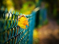 Stuck on a fence by oleg.skl