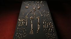 Homo Naledi, New Human Species, Is Found in South African Cave - The New York Times