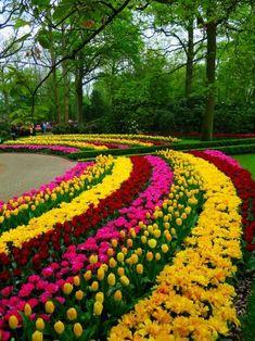 Keukenhof Gardens – Netherlands – Eran Topal – Join the world of pin Most Beautiful Gardens, Beautiful Flowers Garden, Love Garden, Pretty Flowers, Amazing Gardens, Garden Art, Garden Design, Blue Flowers, Beautiful Nature Wallpaper