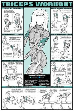 TRICEPS WORKOUT with muscle group indications.