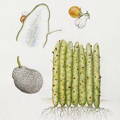 watercolor science illustration - Google Search