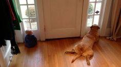 Bebê imita cachorro ao esperar pela mamãe