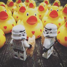 Feeding the rubber ducks