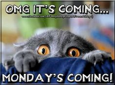 Monday is coming Sunday Quotes Funny, Monday Quotes, Happy Quotes, Funny Quotes, Funny Humor, Sex Quotes, Quotes Images, Memes Humor, Funny Animal Pictures
