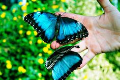 Victoria Butterfly Gardens, Victoria, British Columbia