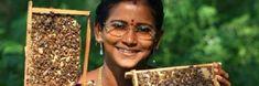 Hoe honingbijen Indiase vrouwen emanciperen