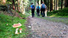 Wandern im Waldviertel: Weitwanderweg entlang der Lainsitz Travel, Hiking, Forests, Viajes, Trips, Traveling, Tourism, Vacations