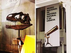 Museu Nacional de História Natural e da Ciência - Lisboa Mistakes, Portugal, The Past, Places To Visit, Knowledge, Museum, Lifestyle, History, Drawings