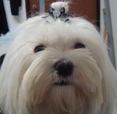 San Nicoló a Trebbia fashion dog di patrizia