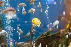 Awesome aquarium Aquarium, Fish, Club, Pets, Awesome, Animals, Animals And Pets, Animales, Animaux