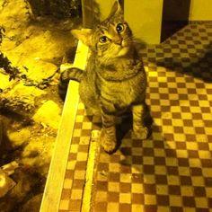 Poor cat:(