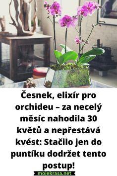 Orchids, Plants, Gardening, Bird Bath Garden, Creative, Lawn And Garden, Plant, Planets, Horticulture