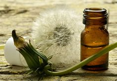 What's better than a plant that gives wishes when you puff it's fluff? A plant that provides health benefits! Dandelion is an excellent food and medicine!