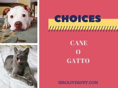 Stamattina mi sveglio chiedendovi di fare una scelta difficile... CANE O GATTO.  Voi cosa preferite?  ^-^