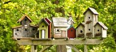 Beaucoup aiment vivre à proximité de certains oiseaux, et leur propose de la graisse l'hiver, mais aussi des nichoirs pour pouvoir les observer, et avoir un petit peu plus de nature encore à proxim…