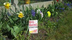 Legal Art 110 Inspirational Books, Bigbang, Art Gallery, Create, Plants, Art Museum, Plant, Planets