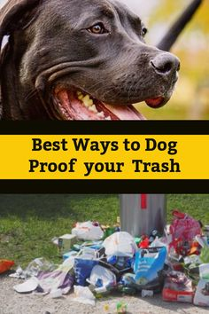 Dog Caught Red Handed Dog Proof Trash Cans Animal