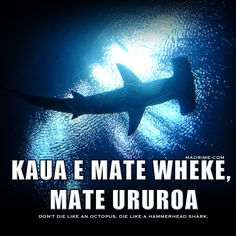 Kaea e mate wheke, mate ururoa Don't die like an octopus, die like a hammerhead shark.