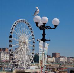 The Brighton Wheel from Brighton Pier