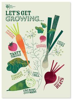 vegetales saludables!