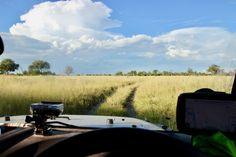 Lion tracking at Xhieba Pan in Khwai, Moremi (Botswana)