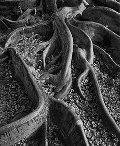 Ansel Adams roots...