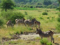 Itinéraire de notre Road-trip Afrique du Sud – Mozambique Safari, Road Trip, Station Balnéaire, Africa, Travel, Animals, South Africa, Archipelago, Viajes
