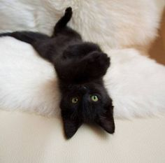 I've never wanted a black cat but ohhh my gosh so adorable! Crazy Cat Lady, Crazy Cats, Cute Baby Animals, Animals And Pets, Fluffy Animals, Animals Images, Cool Cats, I Love Cats, Gatos Cats