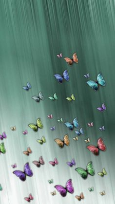 Butterfly Wallpaper Iphone, Cellphone Wallpaper, Iphone Wallpaper, Classroom Art Projects, Art Classroom, Cute Wallpapers, Wallpaper Backgrounds, Daisy Background, Romantic Love Photos