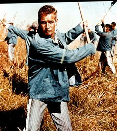 "Paul Newman as Lucas ""Luke"" Jackson in Cool Hand Luke Cool Hand Luke, Jean Simmons, William Faulkner, Tennessee Williams, Joan Collins, Paul Newman, Steve Mcqueen, Elizabeth Taylor, Movie Theater"