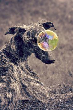 Lehto and his Bubble by Petra Postma.
