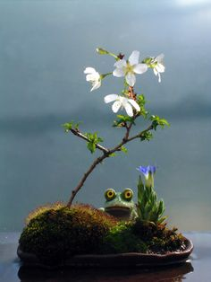 Cherry Blossom Bonsai. Okay, the frog is weird but I love the rest of the design.