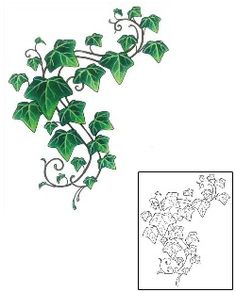 Ivy and Vine Tattoos and Tattoo Designs