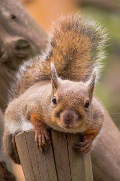 G'morning! Do ya have nut muffins with that coffee? Just askin'. Well, do ya? Do ya?