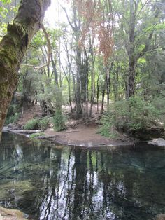Ojos del Caburga, Chile - Foto: Karla Díaz Turchan River, Plants, Outdoor, Eyes, Cute, Scenery, Places, Outdoors, Rivers