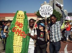 """May 25, 2013 saw a colorful and diverse procession of Durbanites in support of the worldwide protest event """"March against Monsanto."""" One of the main themes of the protest was """"There's poison in your pap"""" (corn porridge) - Durban, South Africa  Read more: http://www.digitaljournal.com/article/350871"""