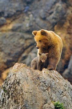 Brown Bears (by aranka delina janné)