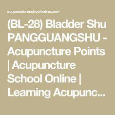 (BL-28) Bladder Shu PANGGUANGSHU - Acupuncture Points | Acupuncture School Online | Learning Acupuncture and Moxibustion Courses Online