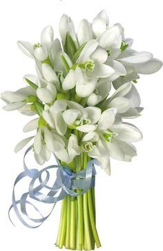 ღϡ₡ღ Snowdrops bouquet Beautiful Bouquet Of Flowers, Tulips Flowers, Spring Flowers, Share Pictures, Blue Dream, Spring Activities, Spring Art, My Flower, Floral Arrangements