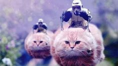 Belgians post pictures and videos of cats using the hashtag #BrusselsLockdown in an attempt to bury tweets about police anti-terror operations in the city