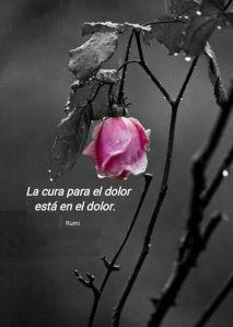 Imagenes De Rosas Negras Con Frases Frases Pinterest