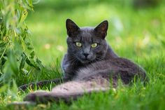 Jade eyes by mailbox9494, via Flickr