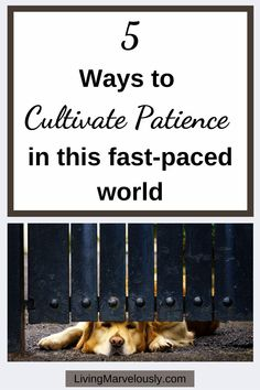 5 ways to cultivate patience in this fast-paced world. Learn why patience is important plus 10 patience quotes for more inspiration. Empty Nest Syndrome, Patience Quotes, Happy Minds, Seasons Of Life, Confidence Building, Self Awareness, Positive Mindset, Live For Yourself, 5 Ways