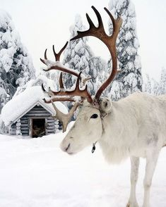 104 Reasons Why Lapland Is The Most Magical Place To Celebrate Christmas Finnisch-Lappland Winterfotografie / Winter Magic, Winter Snow, Winter Christmas, Christmas Tables, Modern Christmas, Scandinavian Christmas, White Christmas Snow, Christmas Time, Christmas Travel