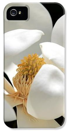 """""""Magical Magnolia"""" by Carol Groenen iPhone case.  #iPhone4case #iPhone5 #iPhone4 #iPhonecases #magnolias #magnolia"""