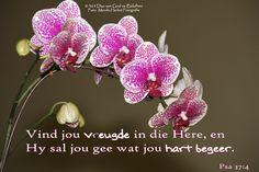 Bybelvers: Psalm 37:4 Vind jou vreugde in die Here, en Hy sal jou gee wat jou hart begeer.