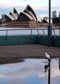 Sydney Opera House & Silver Gull, via Flickr. Gull, South Africa, North America, Opera House, Sydney, Australia, Dreams, Silver, Pictures