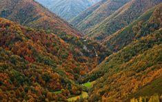 Bosque de Muniellos, reserva natural. Turismo en Asturias