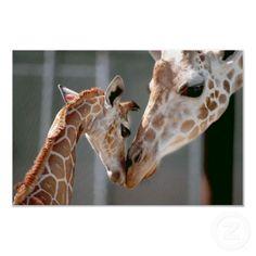 en animal facts giraffe facts.