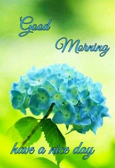 Good Morning Friends Images, Good Morning Beautiful Flowers, Good Morning Roses, Good Morning Images Flowers, Good Morning Beautiful Images, Good Morning Photos, Morning Pictures, Bee Pictures, Beautiful Roses